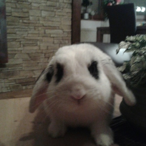 schnuffel13's avatar