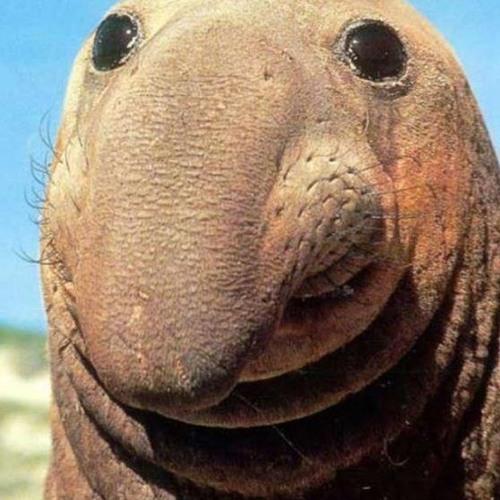 sealsteff's avatar