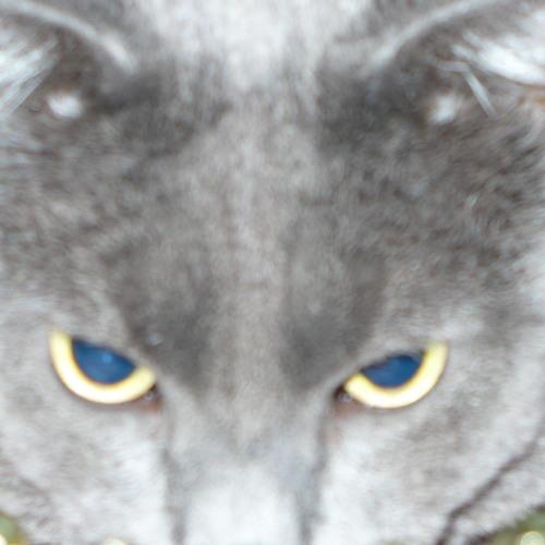 Mojo Rider's avatar
