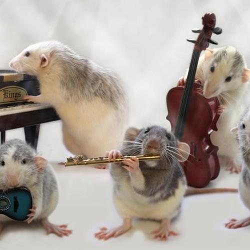 Les rats du Comedia's avatar