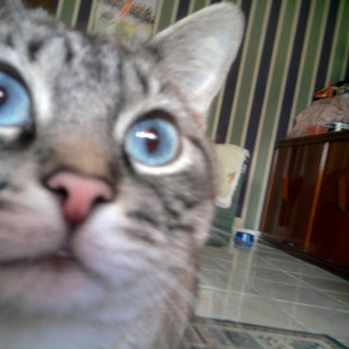 Giuli R.'s avatar