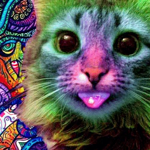 El Gato Loco's avatar