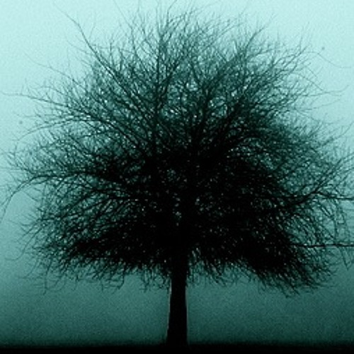 Tree Valley Records's avatar