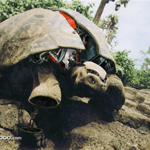 Dj ROBO TURTLE's avatar
