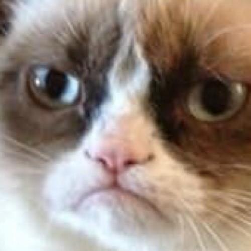 [M][A][D][CAT]'s avatar
