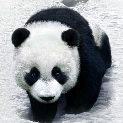 koboya's avatar