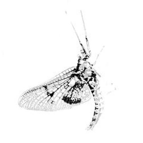 eintagslieder's avatar