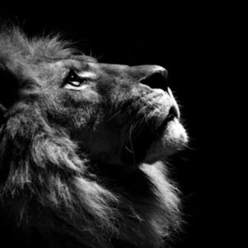 LionBeachMusic's avatar
