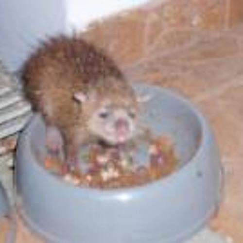 Pascal Barbarin 1's avatar