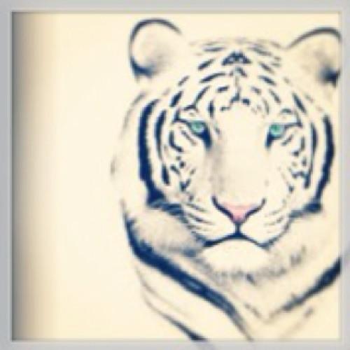caroaymara's avatar