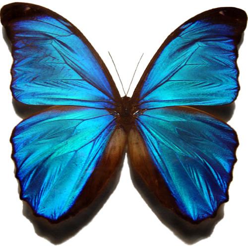 Anguaa7's avatar