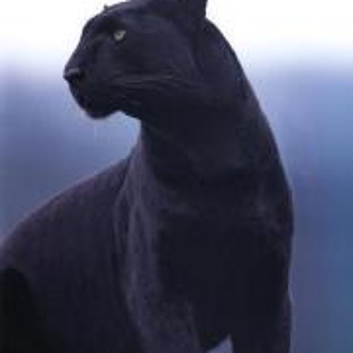 adivish's avatar