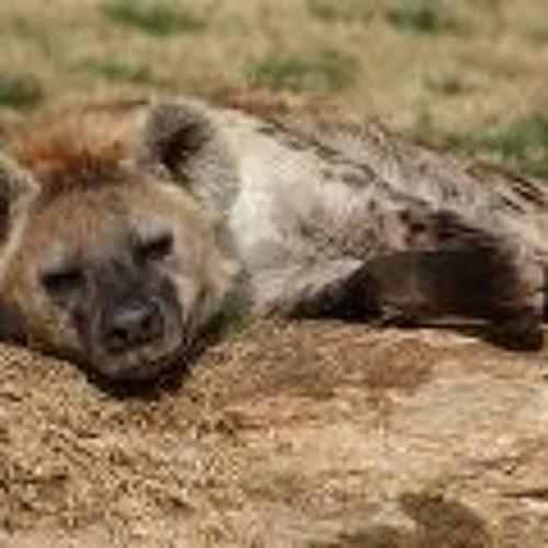 hyena666's avatar