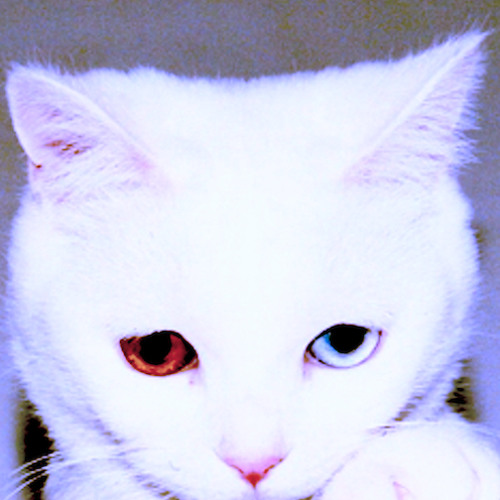 Zélé's avatar