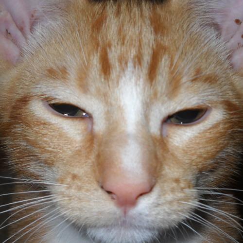 Muffinsrcoolio's avatar