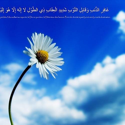om hafsa's avatar