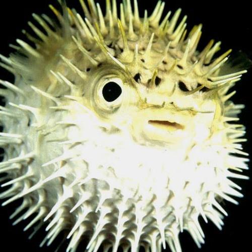 inner shell's avatar