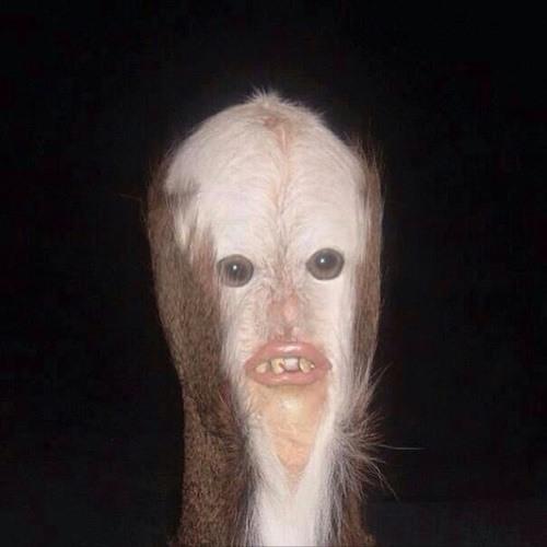 Madomz's avatar