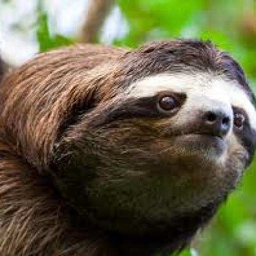 humble sloth's avatar