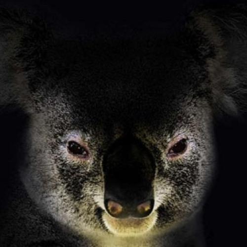 Koala-T | Koala T | Free Listening on SoundCloud