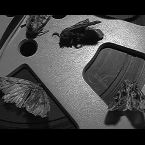 MothHunter's avatar