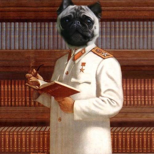 PugNation's avatar