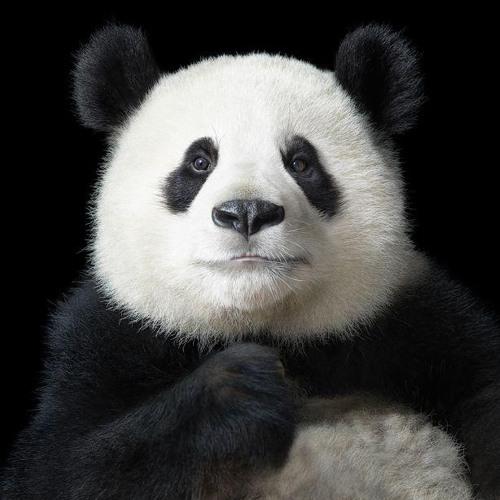 TBoild's avatar