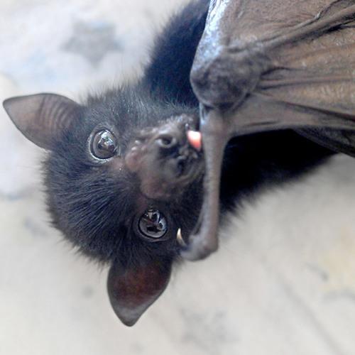 Pretty Bat's avatar