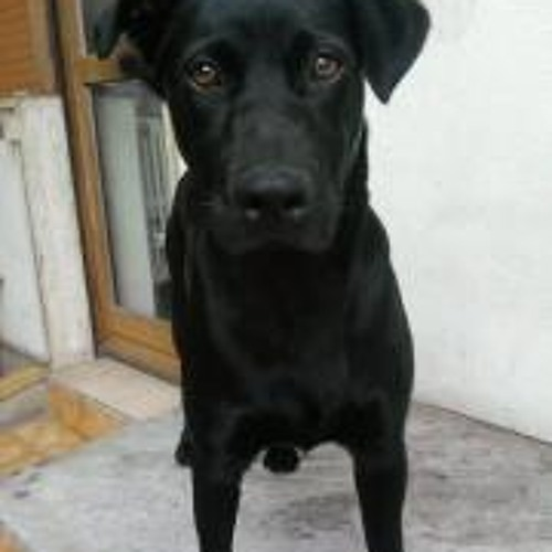 Carrettoni Luca's avatar