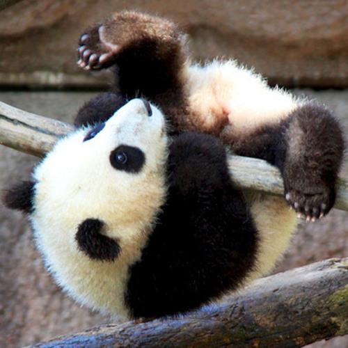 Pandas Hate Faber-Castell's avatar