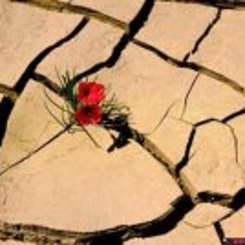 Wind Flower's avatar