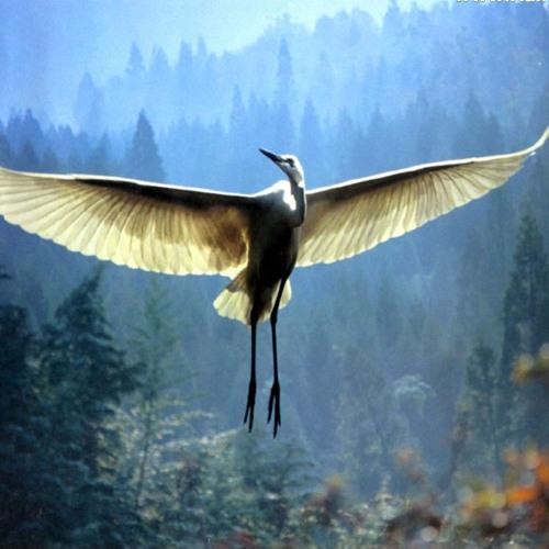 heardbird's avatar