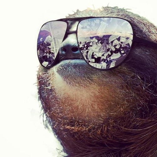 Sloth dad's avatar