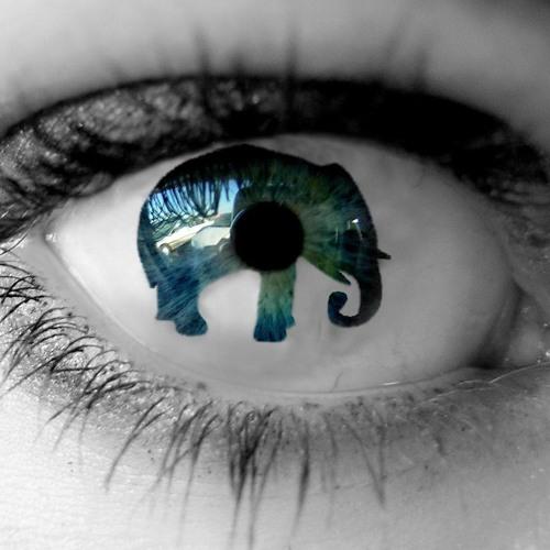 BluePill- להקת הפיל הכחול's avatar