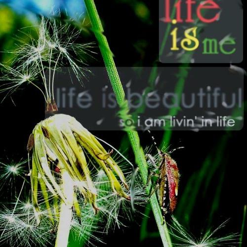 livininlife's avatar