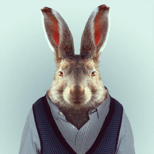 Serious Bunny's avatar