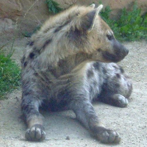 hyaeneleipzig's avatar