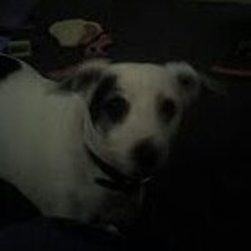 polarthedog's avatar