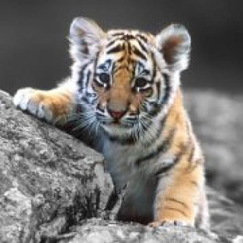 Tiger Liu's avatar