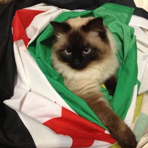 وديلي سلامي يا رايح سورية