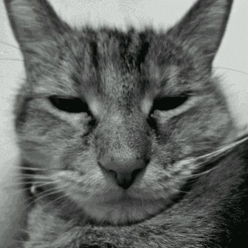 cat(ㅇㅅㅇ✿);;'s avatar