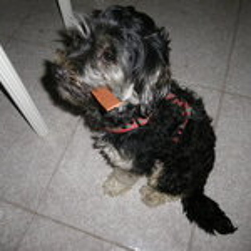 Richard Suárez 4's avatar