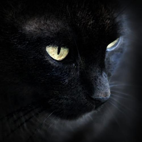 lafuzzzl's avatar