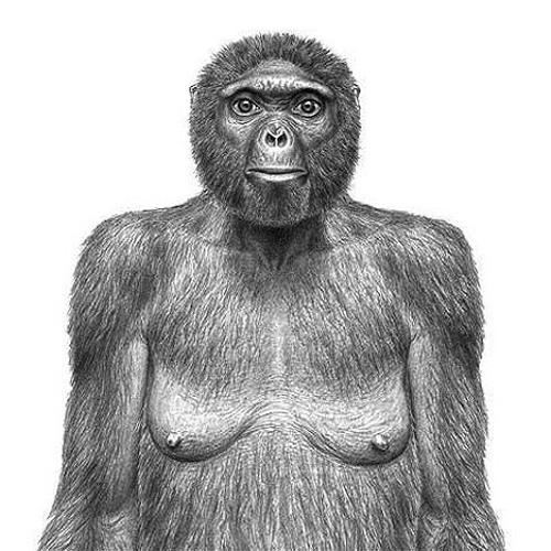 Ancestral Grooves's avatar