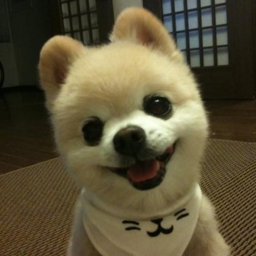 Lanzhou-Lamian's avatar