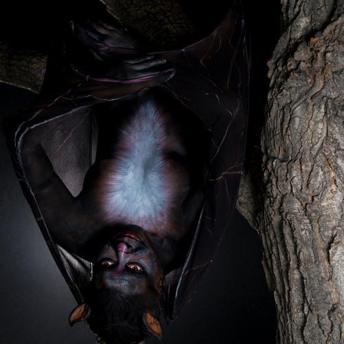 ~Batgirl~'s avatar