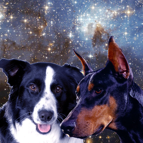 Dobermann&BorderCollie's avatar