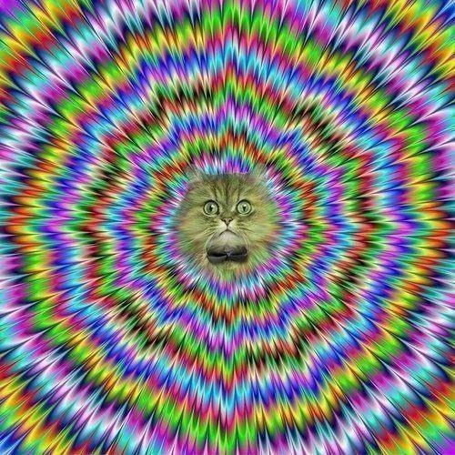OOoOodeer's avatar