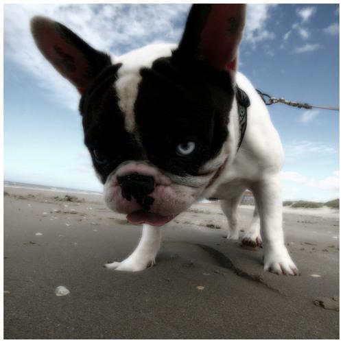 Hellvyn's avatar