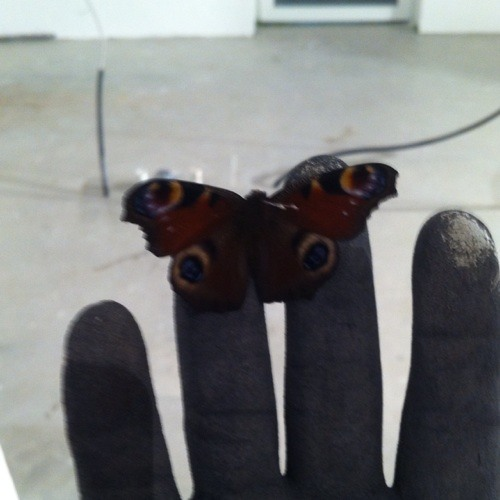 Sami Abu petit Papillon's avatar